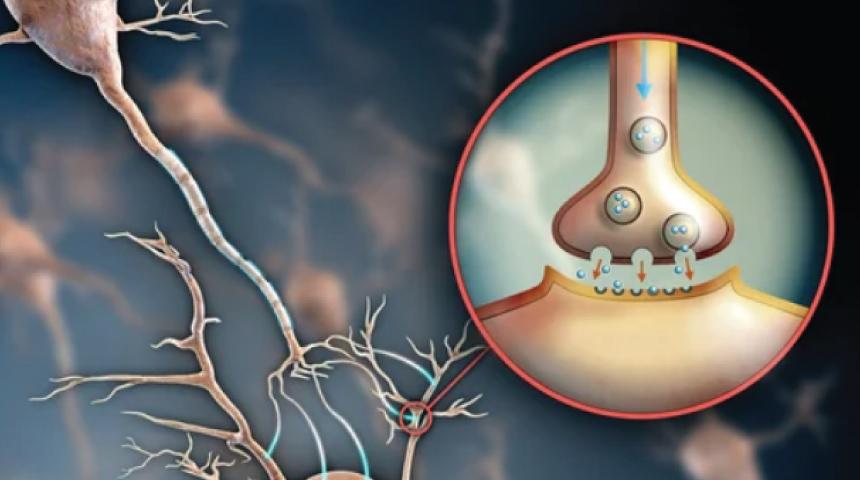 5 formas de mantener sano tu sistema nervioso